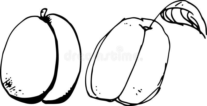 aprikose stock abbildung