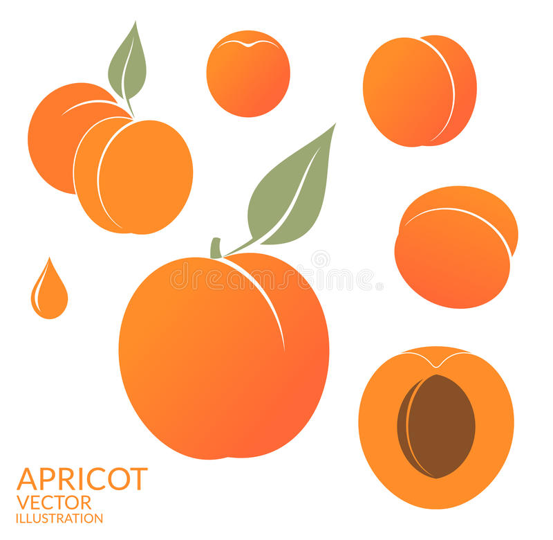 aprikose set stock abbildung