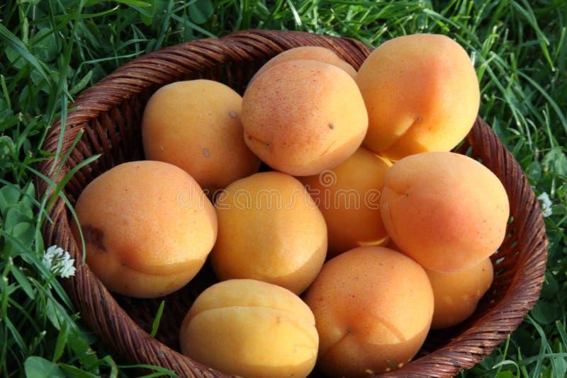 Aprikosen der frischen Früchte lizenzfreies stockbild