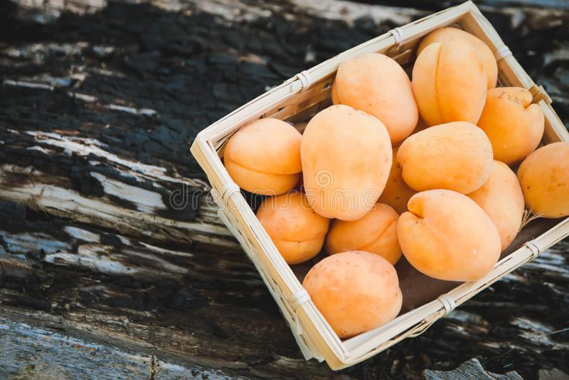 Aprikosen in einem Korb auf einem Baum, Sommernahrung lizenzfreies stockfoto
