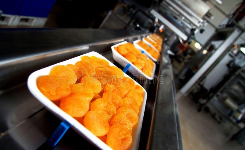 Aprikosen-Fabrik stockfotos