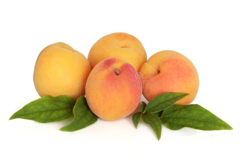 Aprikosen-Frucht stockfotografie