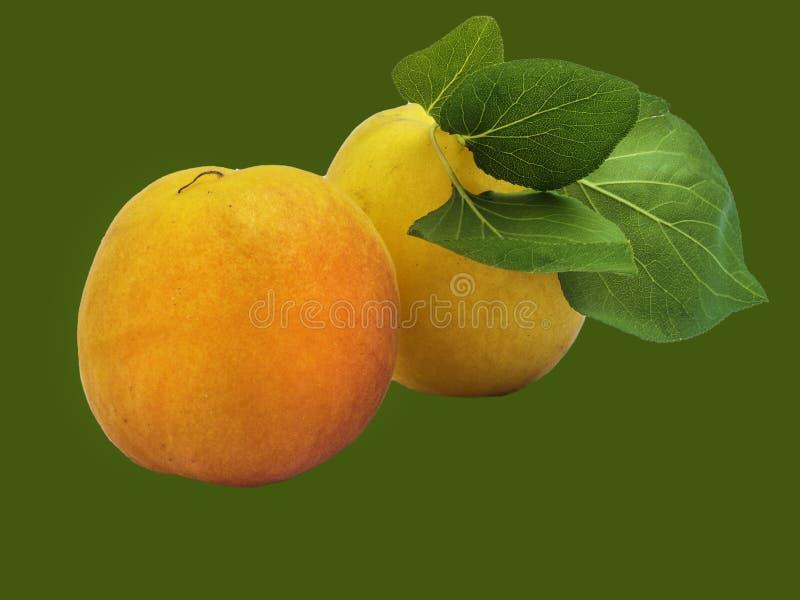 Aprikosen lokalisiert auf Gr?n stockfotos