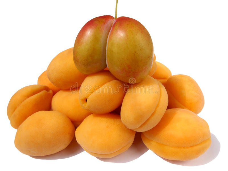 Aprikosenpyramide stockbild