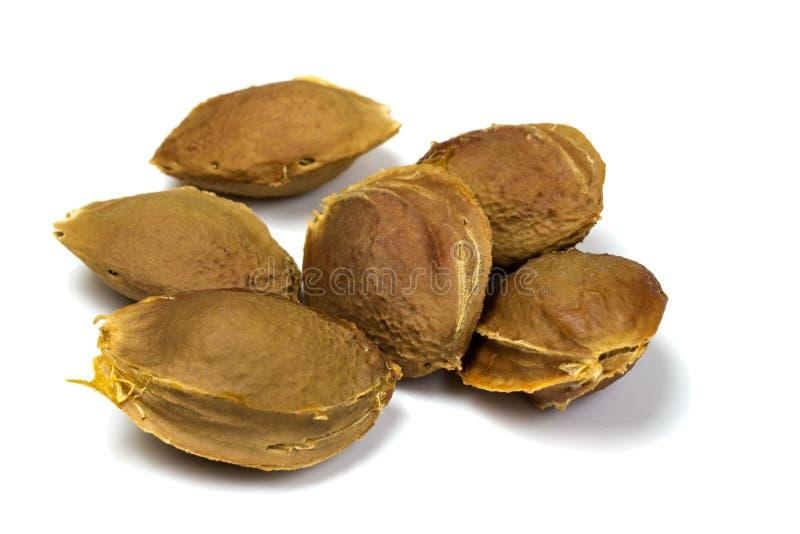 Aprikosensamen lizenzfreie stockfotos