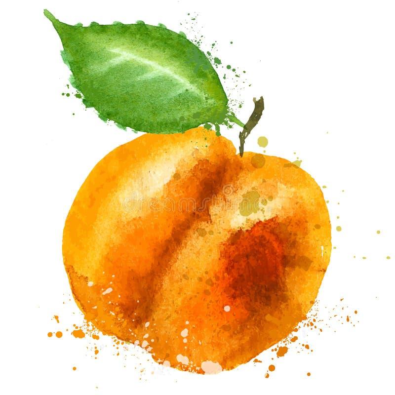 Aprikosenvektorlogo-Designschablone Lebensmittel oder Frucht lizenzfreie abbildung