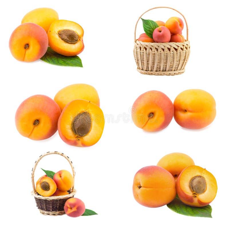 Aprikossamling royaltyfri fotografi