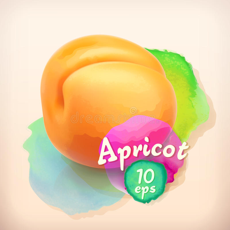 Aprikossommarfrukt vektor illustrationer