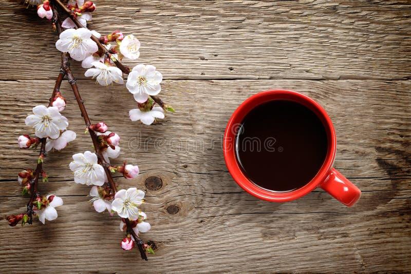Aprikosvårblommor och kaffekopp arkivbild