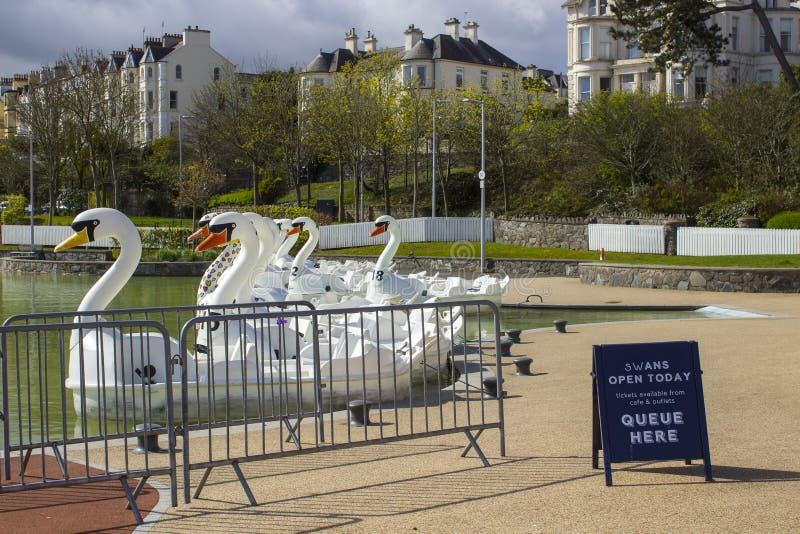 26. April 2018 Bangor Nordirland Schwan themenorientierte pedalos für Miete in der populären Pickie-Mitte sitzen leeres auf einem stockbild