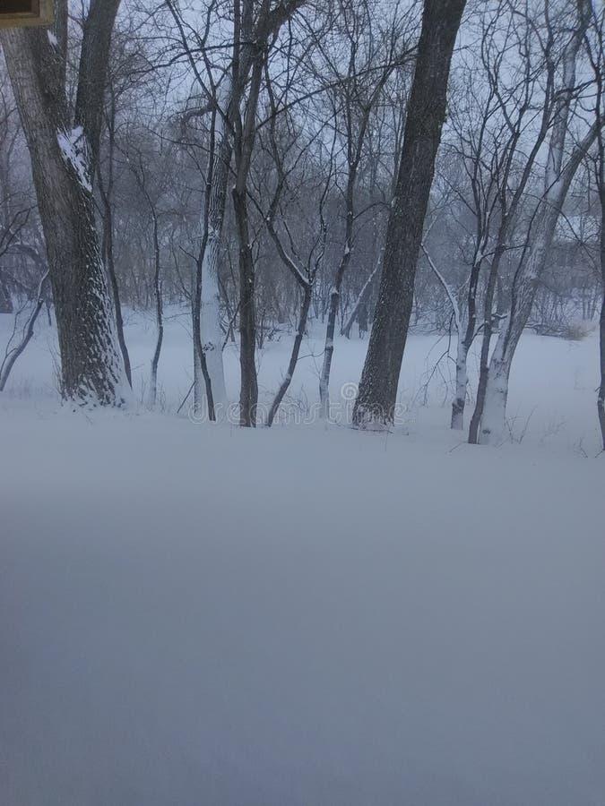 April Blizzard Minnesota royaltyfri bild