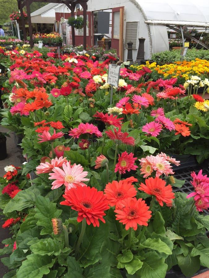 April-Blumen lizenzfreies stockfoto