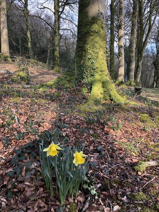 April Daffodils royalty-vrije stock foto's
