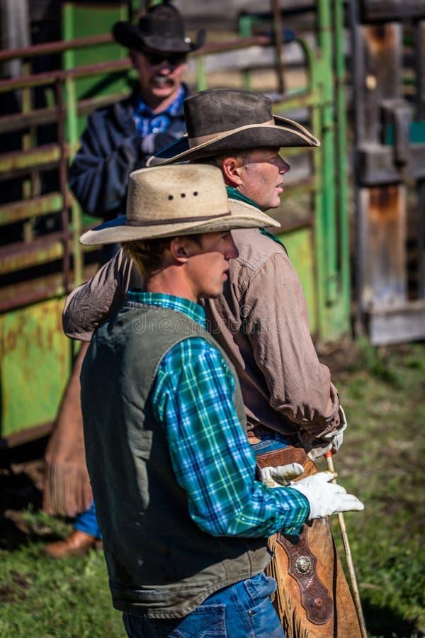 22 APRIL, 2017, RIDGWAY COLORADO: Amerikaanse Cowboy tijdens vee het brandmerken bij Honderdjarige Boerderij, Ridgway, Colorado e royalty-vrije stock foto