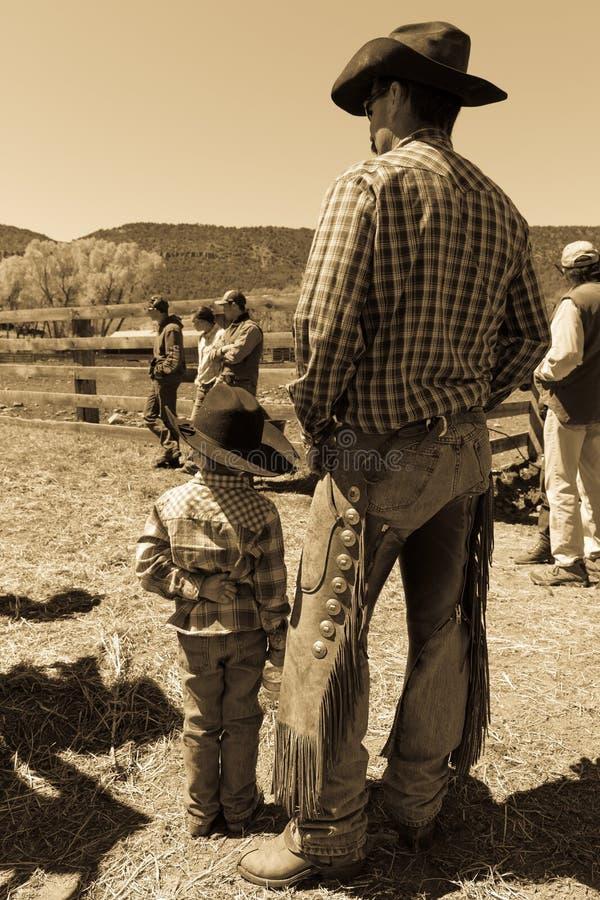 APRIL 22, 2017, RIDGWAY COLORADO: Den unga cowboyen och fadern brännmärker nötkreatur på den hundraårs- ranchen, Ridgway, Colorad royaltyfri fotografi