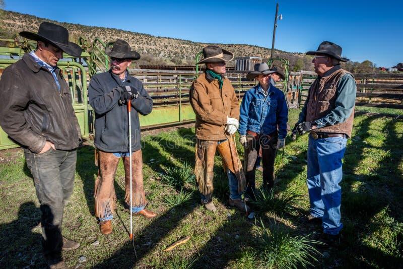 APRIL 22, 2017, RIDGWAY COLORADO: ranchägaren Vince Kotny talar till cowboyer, som brännmärker nötkreatur på hundraårs- ranch, Ri arkivfoto