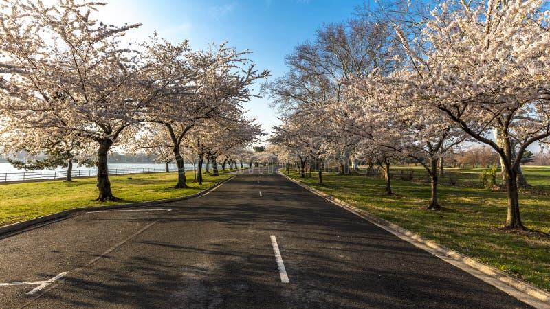 10. APRIL 2018 - WASHINGTON D C - US Cherry Blossoms zu Hains-Punkt, Gezeiten- Ostbecken Washington Blüte, Erinnerungs lizenzfreies stockbild