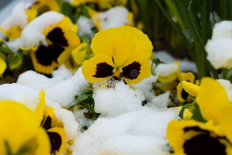 April-Wetter lizenzfreies stockbild