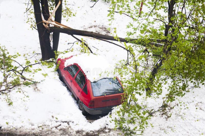 Aprile 2017 Chisinau, Moldavia Precipitazioni nevose sopra gli alberi verdi - tempo anormale fotografie stock libere da diritti
