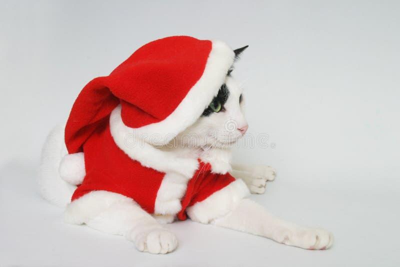 Apronte para o Natal fotos de stock