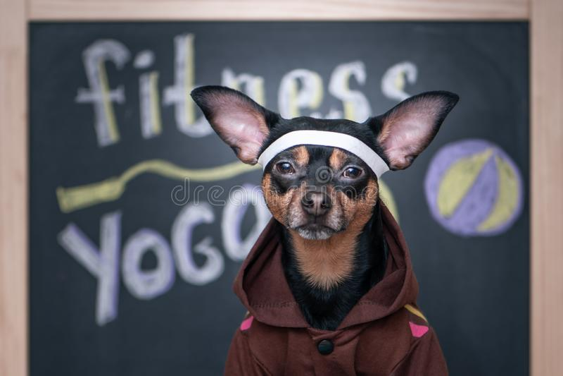 Aptidão do cão, esporte e conceito do estilo de vida Estilo de vida desportivo e saudável para o animal de estimação ‹Engraçado d imagens de stock royalty free