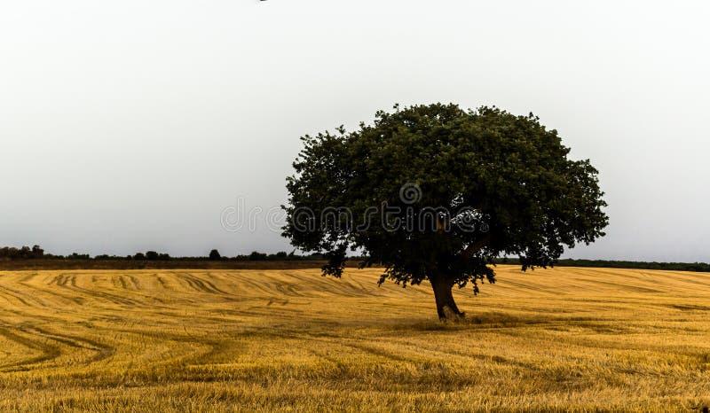 Apulia höst fotografering för bildbyråer
