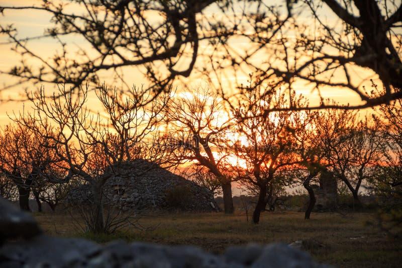 apulian bygd Lantligt landskap på solnedgången: trullo bland träd italy Typisk lantligt Apulian landskap royaltyfri foto