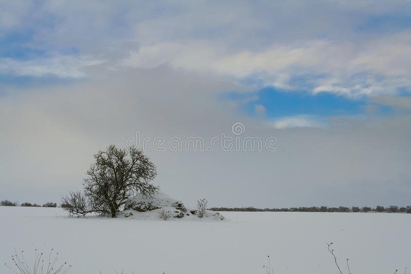 Apulian Christmas: trullo with tree in a snowy field.Italy,Apulia. royalty free stock image