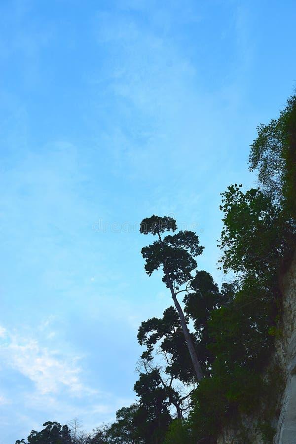 Apunte arriba - silueta de un árbol alto contra el cielo azul claro - el tacto del cielo foto de archivo