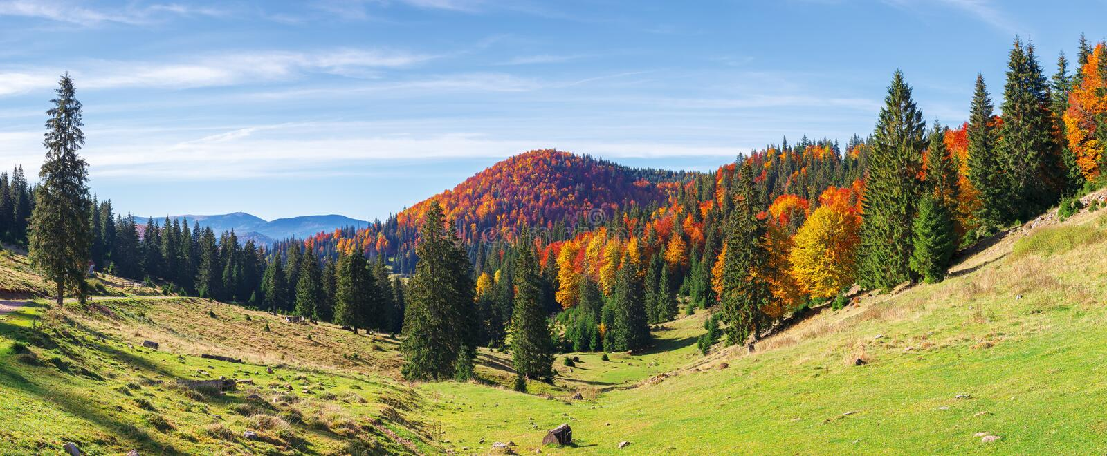 Apuseni natural park in autumn. Amazing morning panorama of varasoaia meadow, bihor, romania. forest on the mountain in fall color. spruce trees in the valley royalty free stock photos