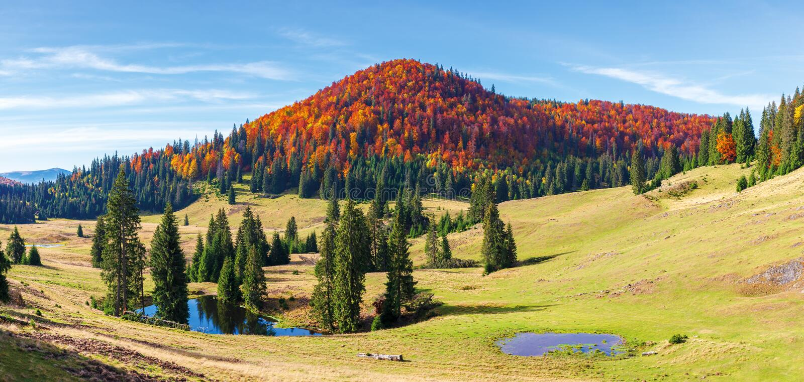 Apuseni natural park in autumn. Amazing morning panorama of varasoaia meadow, bihor, romania. forest on the mountain in fall color. spruce trees around small royalty free stock images