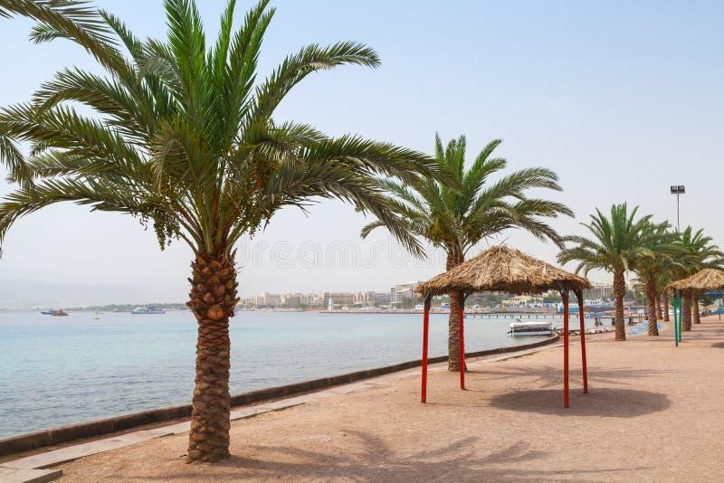 Aqaba strandsikt med palmträd royaltyfri bild