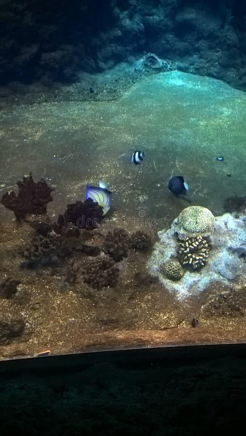 aqarium photos stock