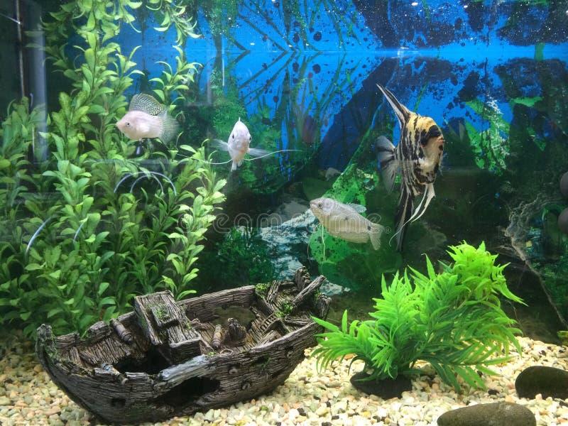 aqarium royaltyfri fotografi