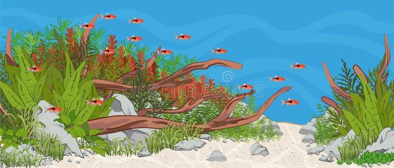 Aquário Aquário plantado com peixes ilustração royalty free