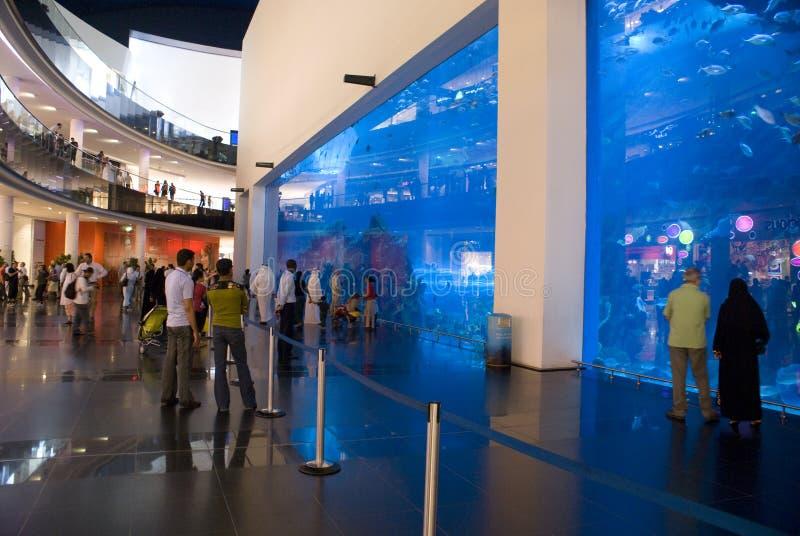Aquário da alameda de Dubai fotos de stock royalty free