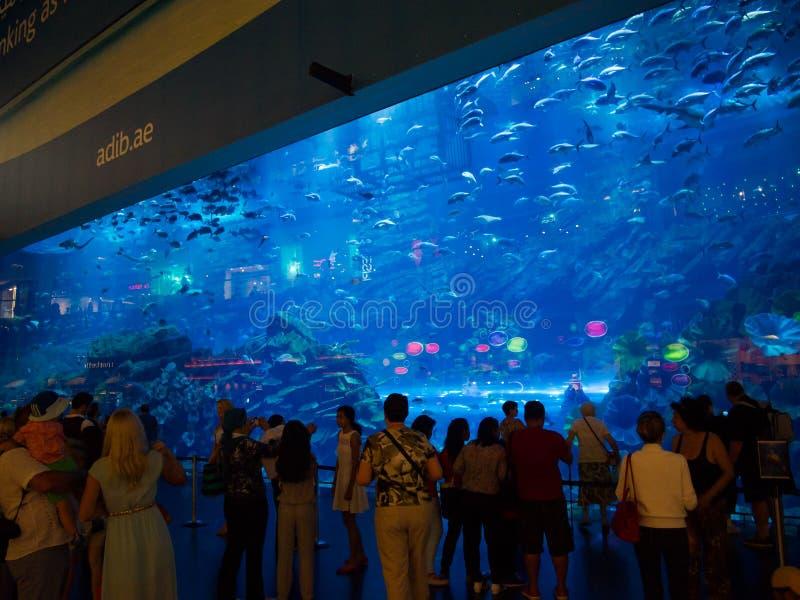 Aquário da alameda de Dubai imagens de stock