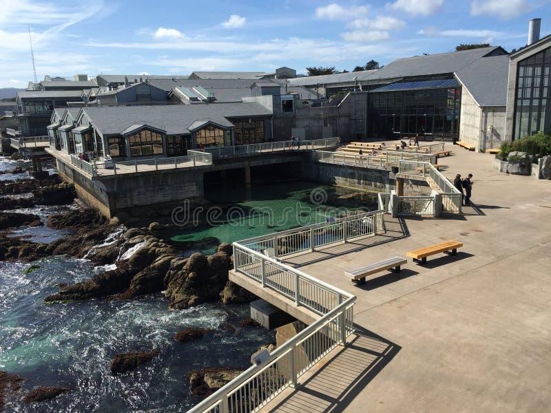 Aquário da baía de Monterey imagem de stock royalty free