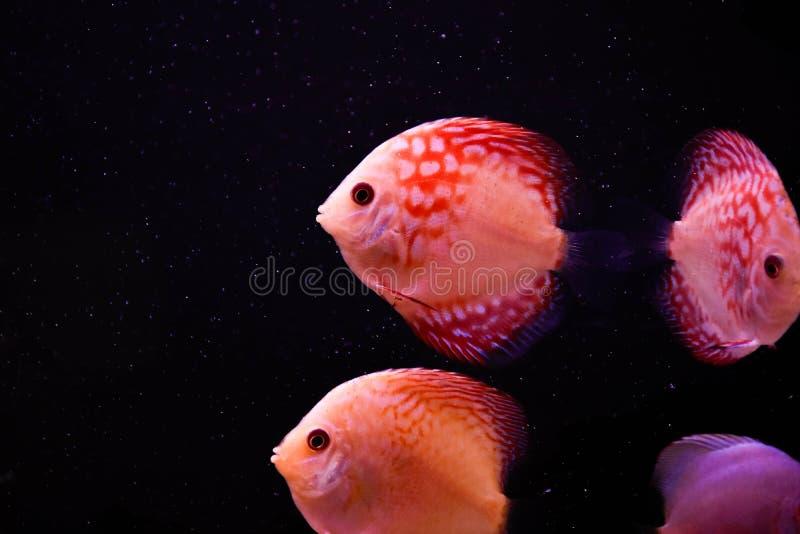 Aquário de água doce e marinho com peixes, planta, schrimp e mais imagem de stock royalty free