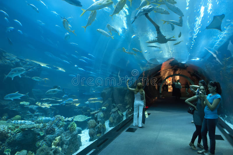 Aquário de Dubai em Dubaimall fotografia de stock royalty free