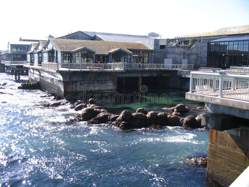 Aquário de Monterey fotografia de stock