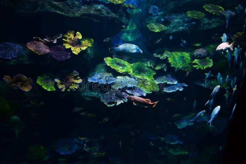 Aquário de muitos peixes foto de stock