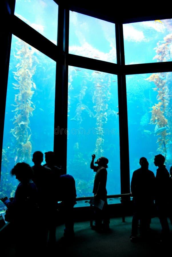 Aquário do louro de Monterey imagem de stock royalty free