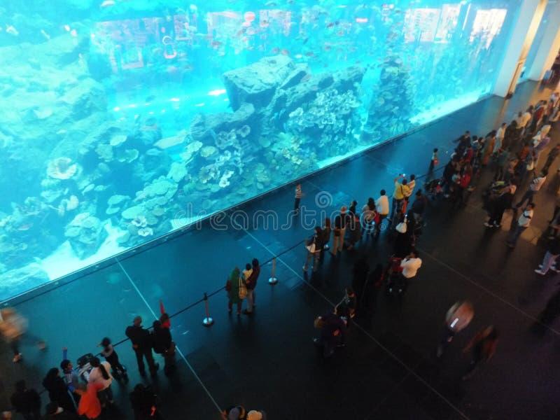 Aquário na alameda de Dubai fotos de stock royalty free