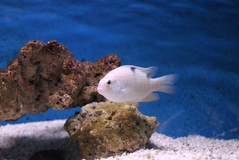 Aquário subaquático do mundo fotografia de stock