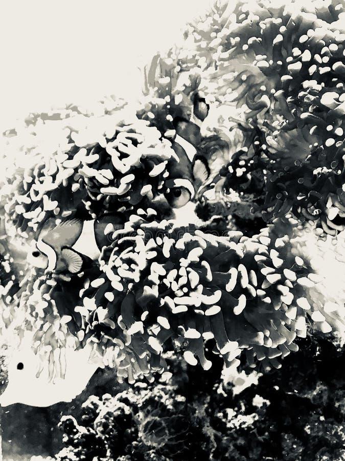 Aquário tropical dos peixes com uma borda do vintage foto de stock