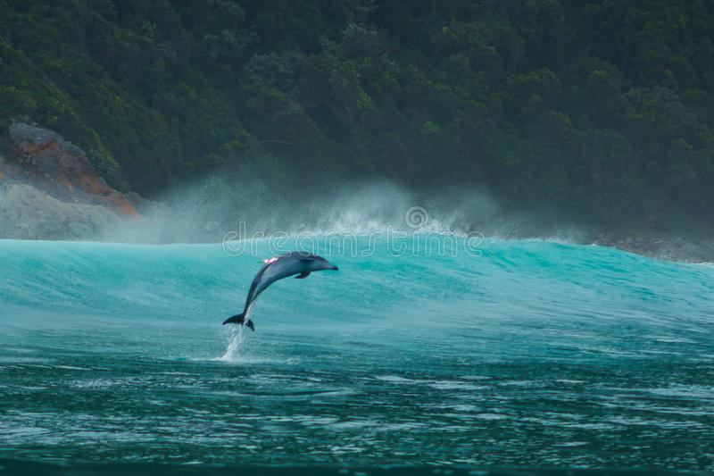 Aqua Aquatics zdjęcie royalty free