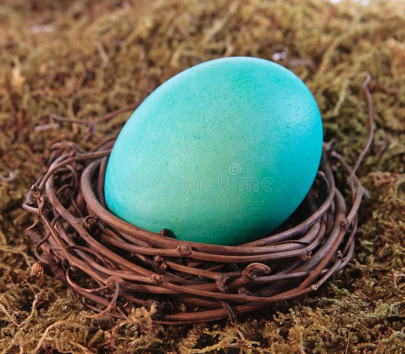 Aqua blue dyed Easter egg in nest. Aqua blue dyed Easter egg in grapevine nest on mossy background - close up view royalty free stock photography