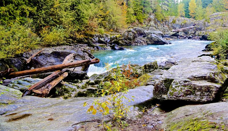 River Whistler. Aqua colored glacier fed river in Whistler Canada with logs and green royalty free stock photos