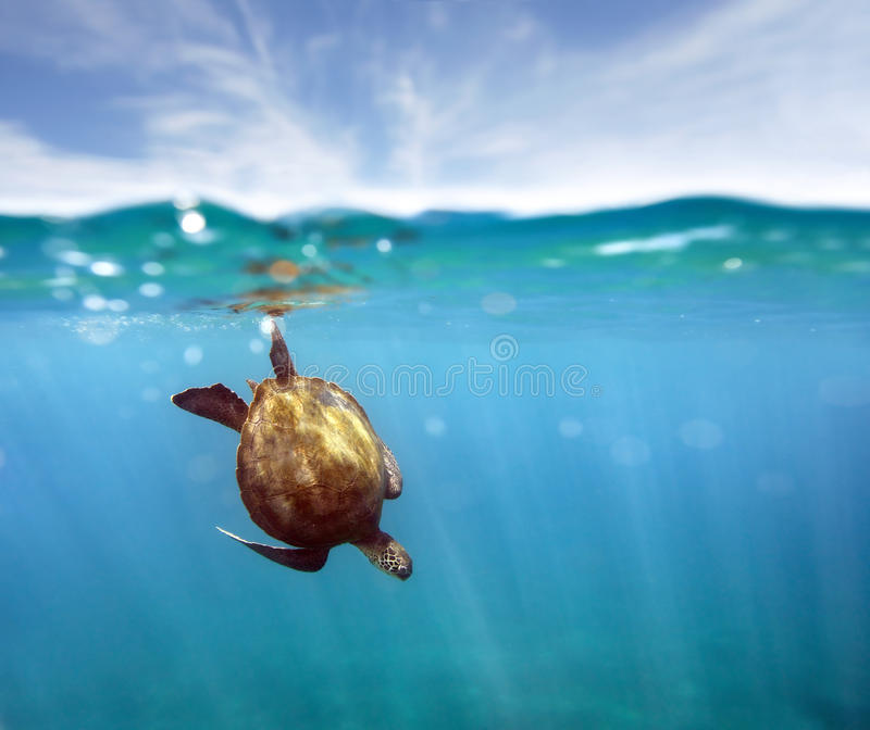 Aqua turtle stock photo